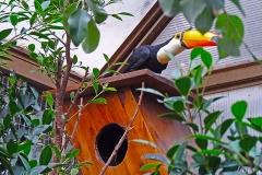 Nest_13_big